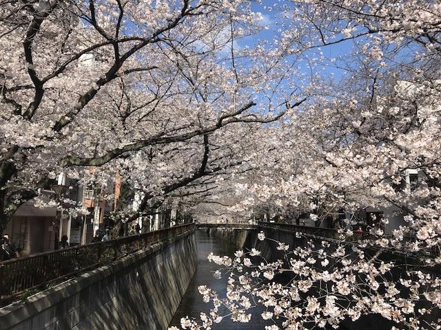 中目黒の桜(中目黒駅近く)